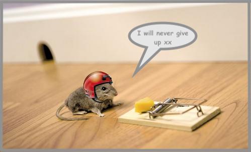 Mouseinhelmetcopy.png